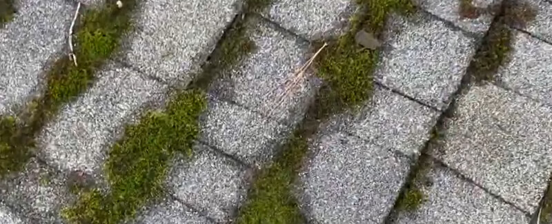 austin roof moss removal